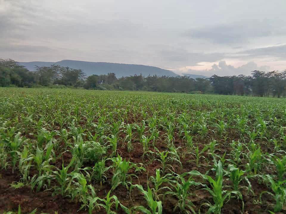 Farm_Mais_regen